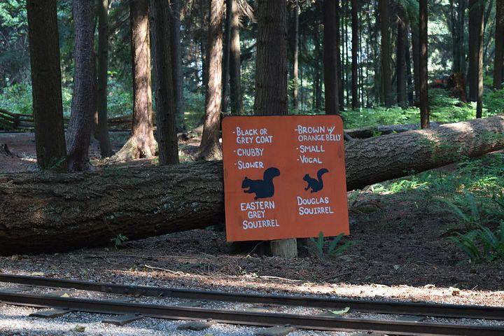 Que hacer en el parque Stanley Canadá. Foto Haydn Blackey