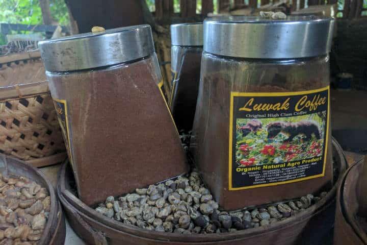 kopi-luwak-indonesia-16