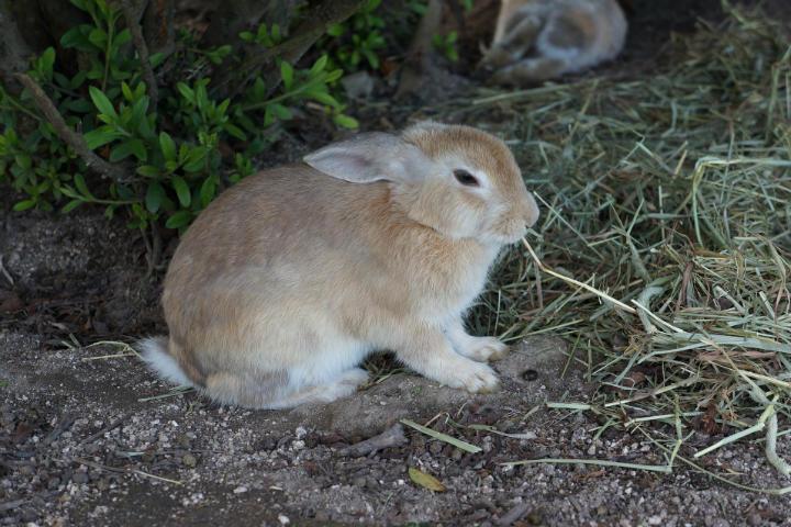 rabbit-1174664_1920