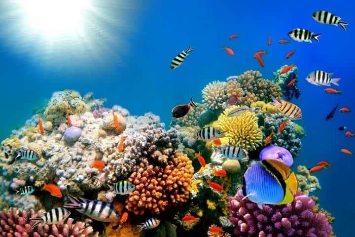 Arrecife Maya Foto: K´iin Tulum