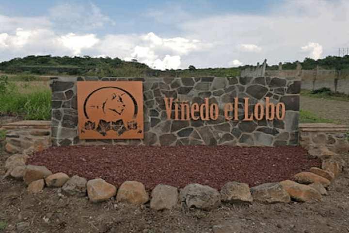 Viñedo el lobo en Guanajuato: Ópera en un paisaje mexicano