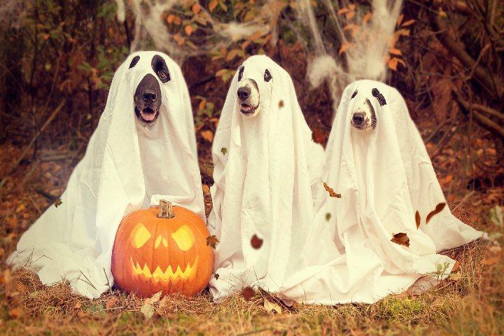 Boo! Foto Nancy Sticke.