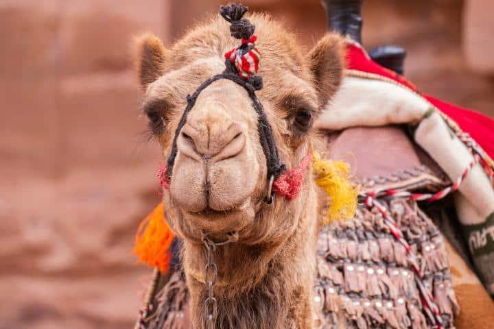 En Petra descubrirás cosas asombrosas. Foto: Heidelbergin