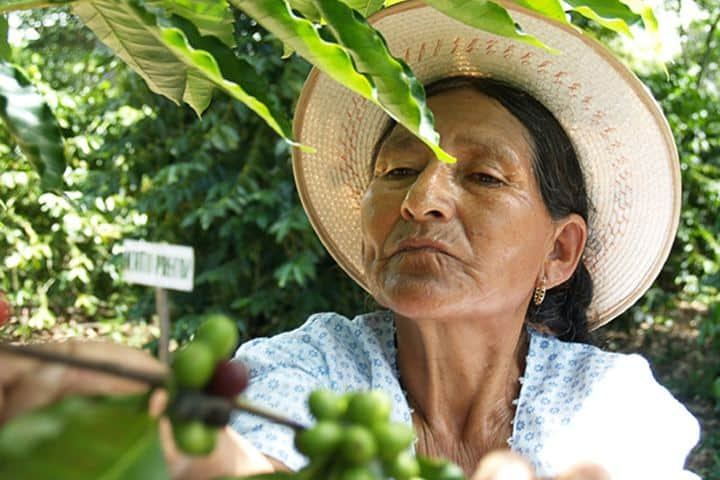 Crecimiento Económico Foto: Revista agrícola