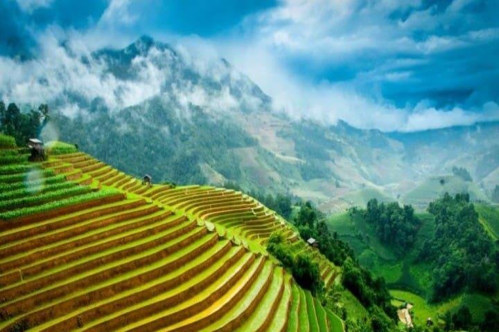 Cultivos de arroz Foto_ Original Vietnam
