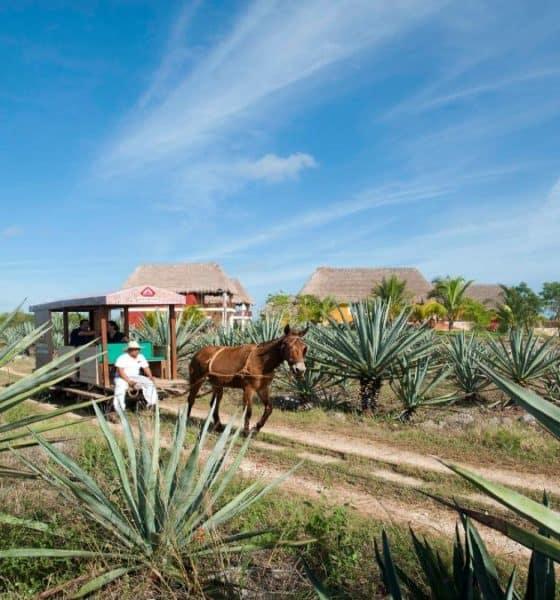 Hacienda Sotuta Foto: Sotuta de Peón via Facebook