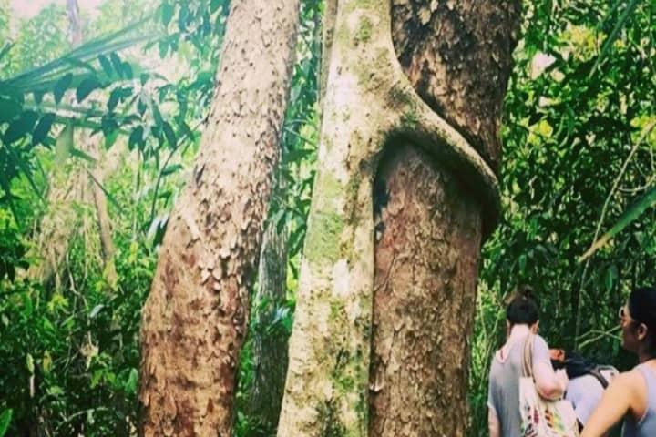 Los árboles de la leyenda Maya del Chechén y el Chacá Foto: Mochileros de Yucatán