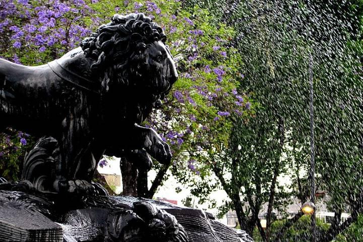 Los imponentes leones. Foto: Thomas Gorman
