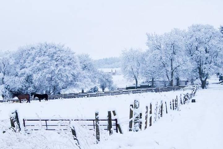 Parque Cairngorms en invierno. Foto Cairngorms National Park