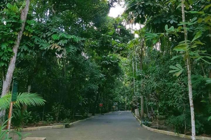 Descubre el fascinante Bosque de la Ciencia. Foto condejones