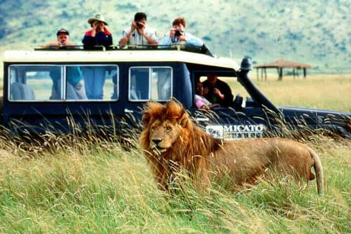 Safari-leon-2