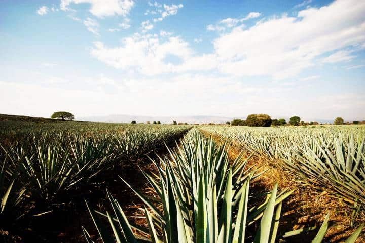 Tequila. Foto: Archivo
