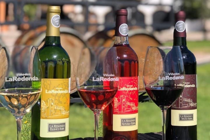 Viñedos La redonda pone a nuestra disposición una experiencia vitivinícola increíble. Foto: Viñedos La Redonda
