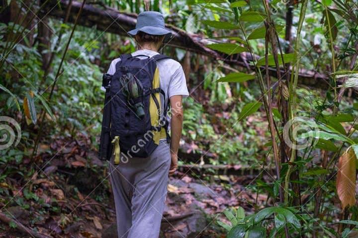 selva-tropical-2