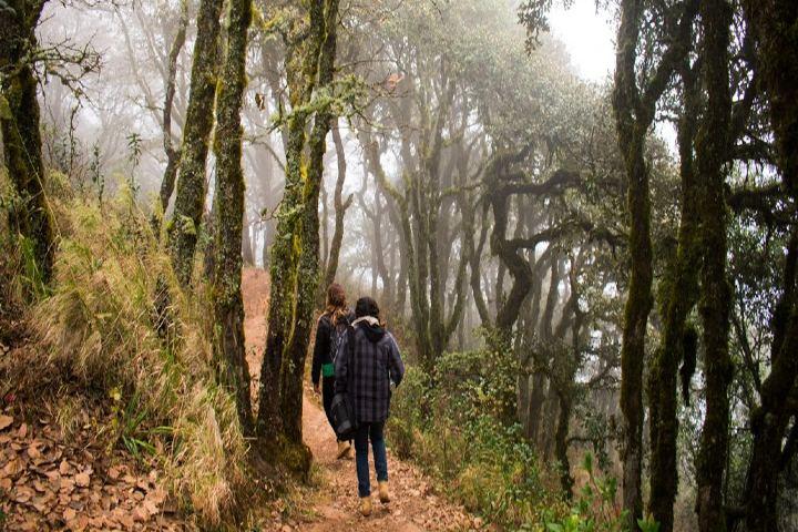 4 palos- Sierra Gorda Ecotours 6