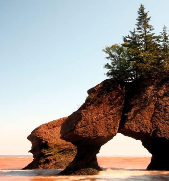 Bahia Fundy. Foto: GrowPro Experience