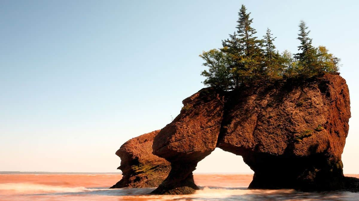 Bahia Fundy. Foto: GrowPro Experience