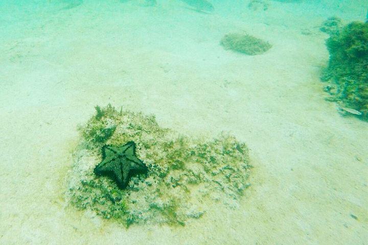 Buceo en Isla Coronado. Baja California Sur. Imagen: costera.mx