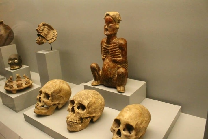 Cráneos expuestos en el Museo Amparo en Puebla. Foto: Sala prensa BUAP