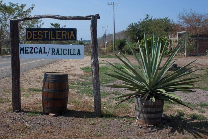 Disfruta el recorrido de la Ruta de la Raicilla en Jalisco. Foto: La Política