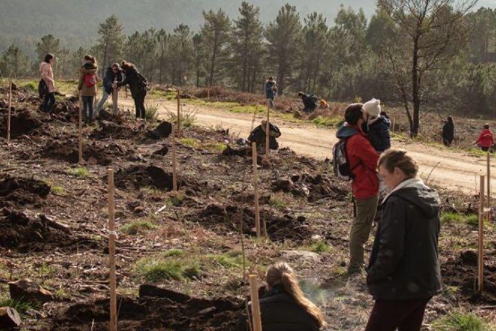 El gran trabajo de reforestación es parte importantisima del festival. Foto: PortAmérica