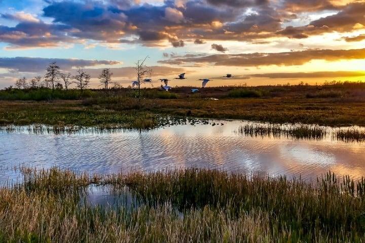 Everglades es uno de los Parques Nacionales de Florida. Foto: Outside Online