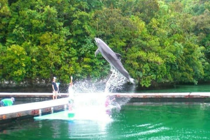 Actividades imperdibles en Palaos. Foto: TripAdvisor