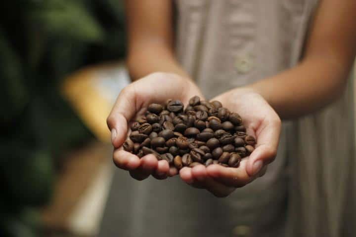 Granos de Café Foto: Animal Gourmet