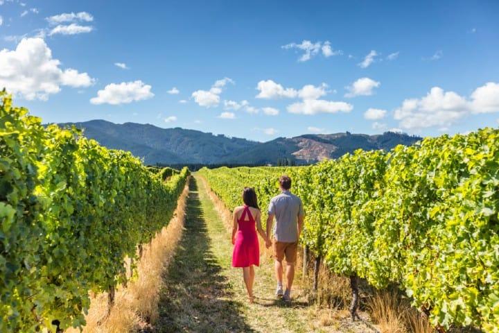 Un romántico paseo por el Viñedo L.A. Cetto