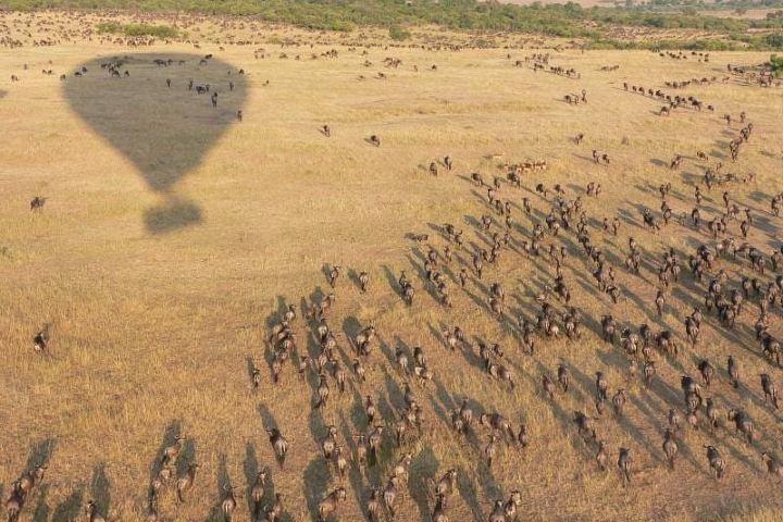 La vida salvaje como nunca antes la has visto. Foto: masai_mara_safari