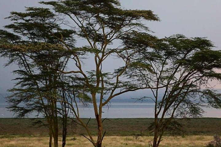 Parque Nacional Lago de Nakuru, el lugar de la migración del flamenco Foto: Miguel Ángel | Flickr