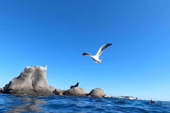 Lobos marinos. Isla Coronado. Imagen: ara.atemporal