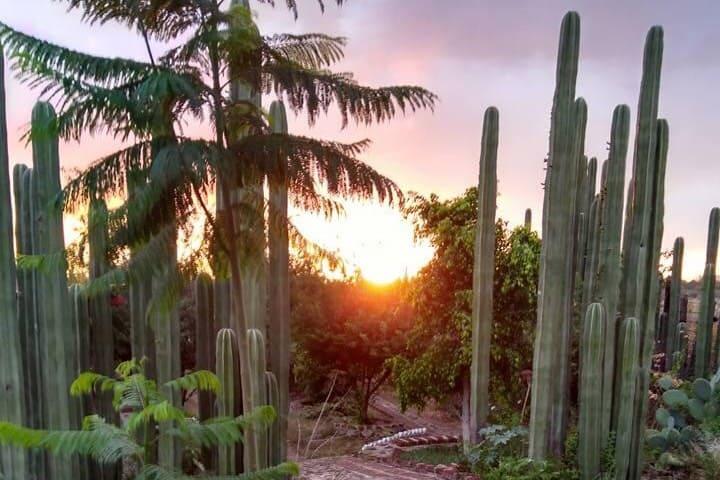 Los cactus conectarán contigo en el turismo rural de Irapuato. Foto: Rancho La Cumbre | Facebook