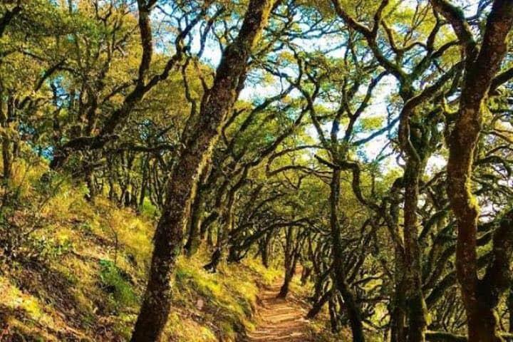 Los senderos en Cuatro Palos, Querétaro son únicos. Foto: Archivo