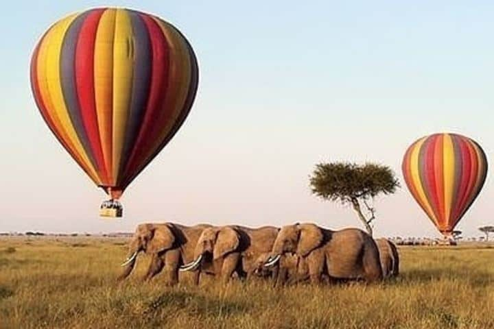 Podrás observar una manada de elefantes a muy baja altura. Foto: masai_mara_safari
