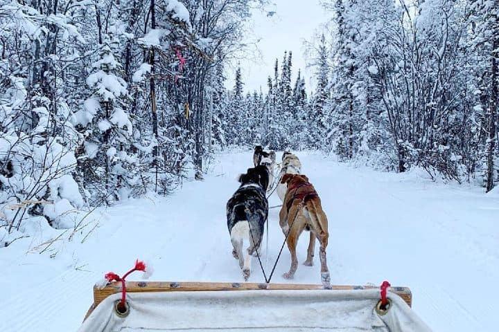 Paseo con perros locales. Canadá. Imagen: guanjyundong