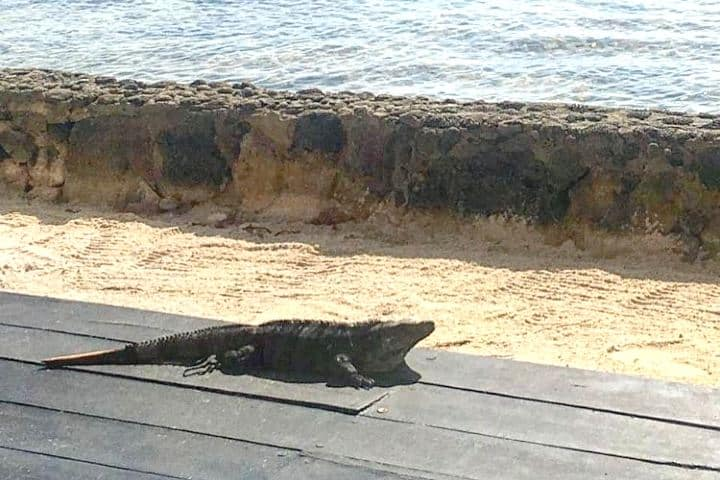Playa nudista en la Riviera Maya. Imagen: eldoradoseaside