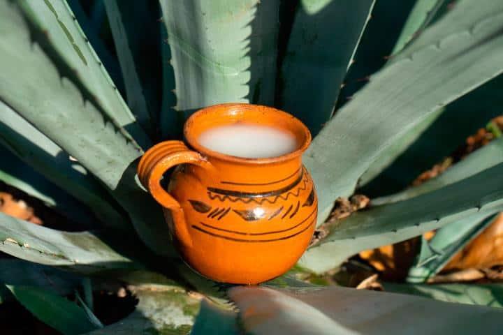Puedes acompañar los platillos de las cocineras tradicionales de San Luis Potosí con pulque. Foto: Mundo Hoy