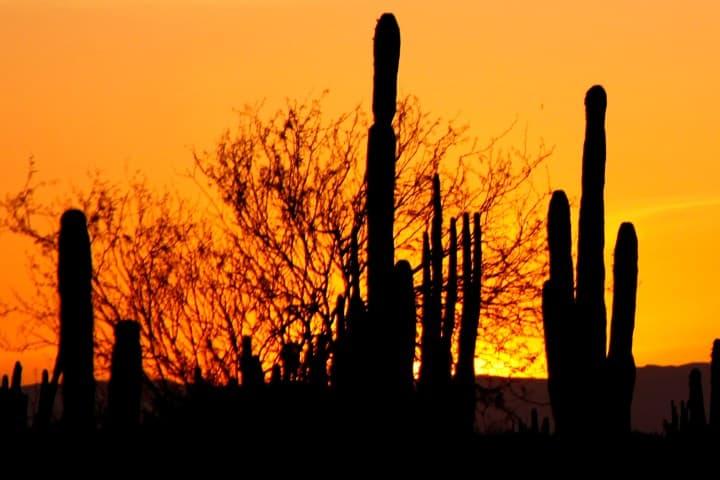 Sonoran_desert_sunset-2