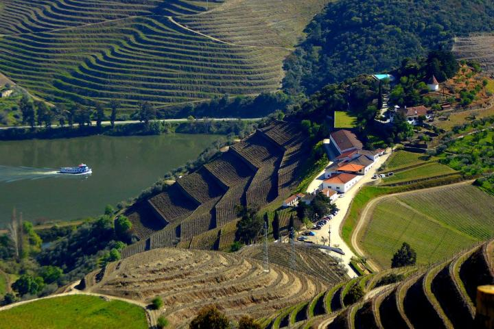 Terreno de Quinta do Castro. Foto: Portugal By Wine1