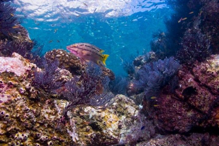 Un mundo bajo las hermosas aguas de la Isla Coronado. Foto: datamares.ucsd
