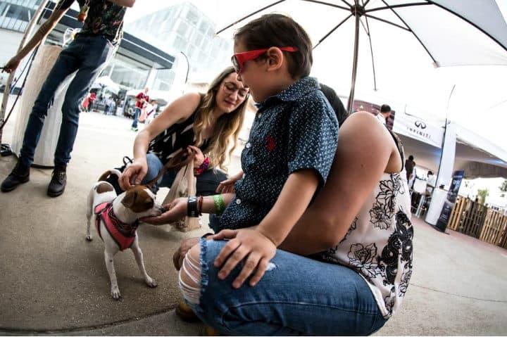 Evento Petfriendly. Foto La Vendimia en Nuestra Tierra