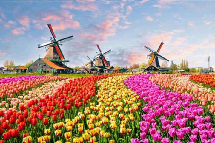 campos-tulipanes-holanda-768×544-1