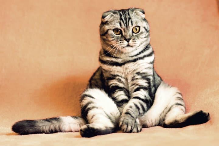 cat-2934720_1920