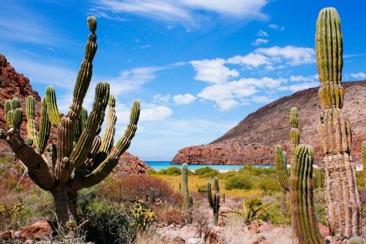 En el Desierto del Vizcaíno puedes hacer pesca dentro de Baja California Sur. Foto: Turismo México