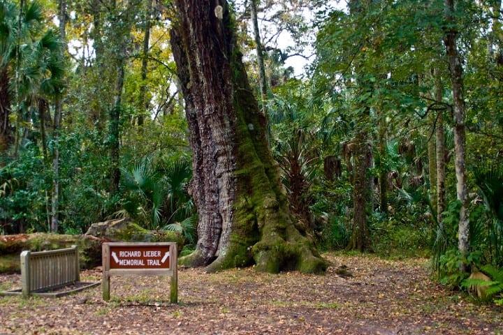 Highland Hammock, uno de los Parques Estatales de Florida. Foto: Florida Hikes