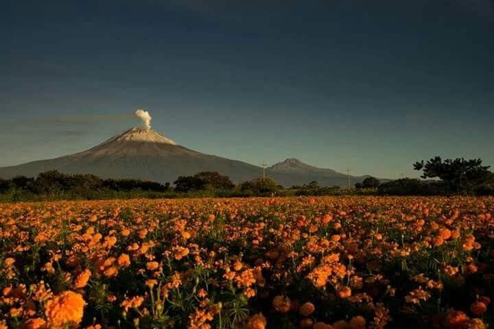 ¡Que ganas de estar en un lugar rodeado de flores de temporada! Foto: pinterest