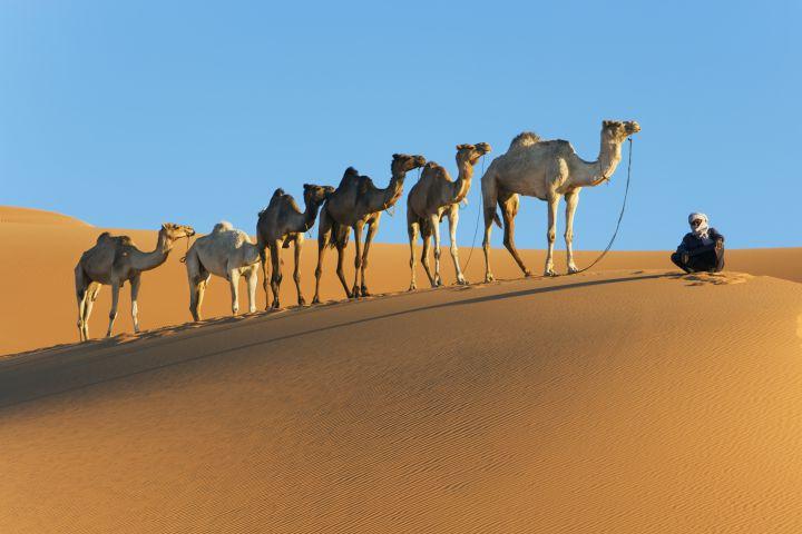 Actividades en el desierto del Sahara