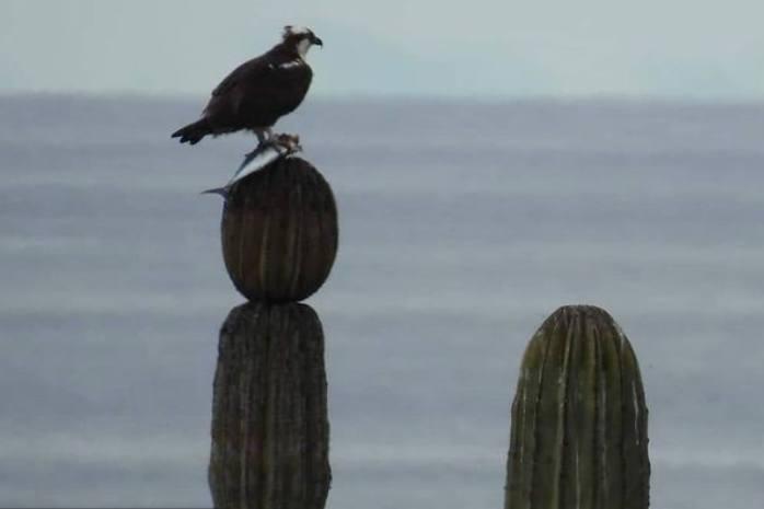Aves endémicas – Foto Rubén Durán