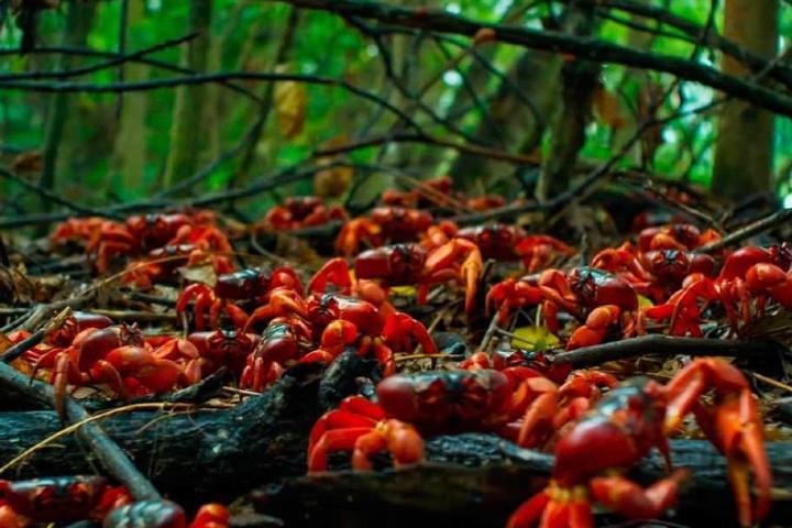 Isla-de-Navidad-cangrejos-Grow-Pro-Experience-1024×612-1